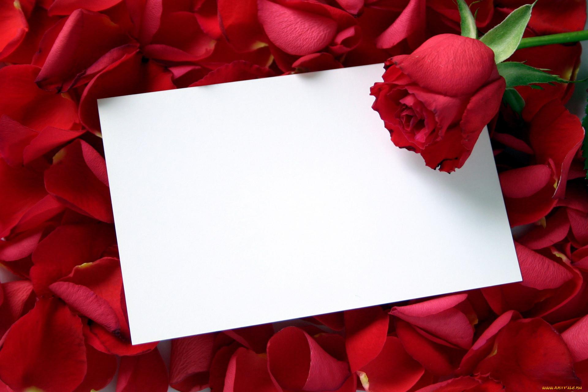 скромно, картинки о любви имени танзиля время остановку